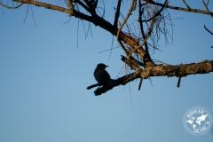 Oiseau, Floride