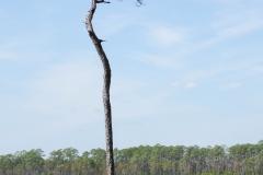 Tarkiln state park, Florida.